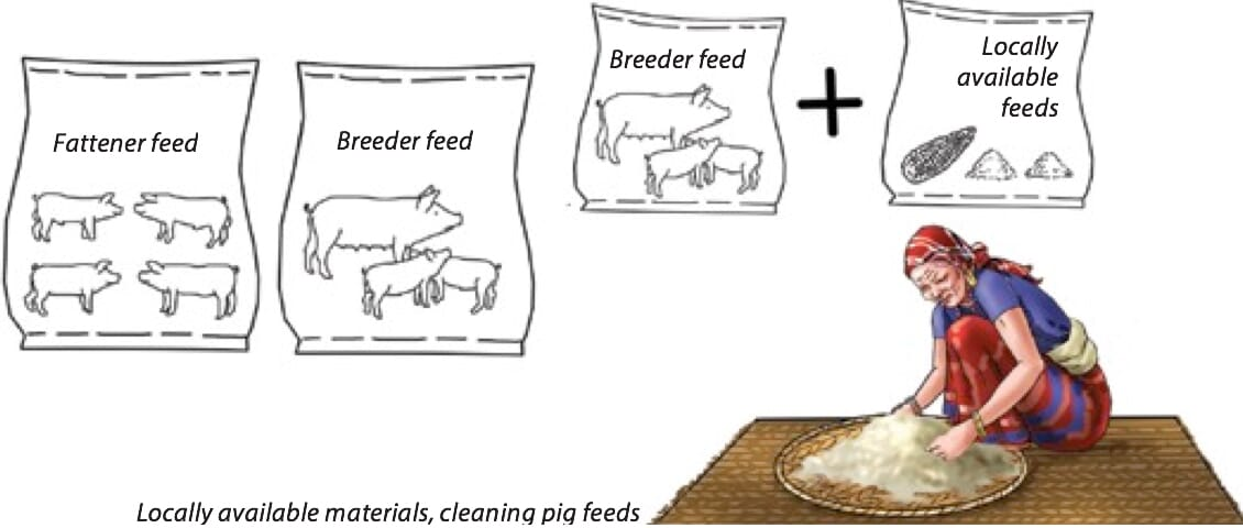 Proper Ways of Feeding Pigs