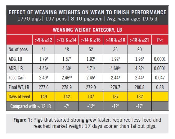 Nursery Weight Predicts Finishing Pig Performance | The Pig Site