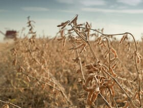 The soy sector believes that it can increase productivity six-fold on existing agricultural land