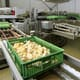 Sri Lanka's broiler breeders warn of potential crisis for industry thumbnail image