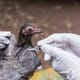 Officials estimate that 2 percent of Kazakhstan's poultry died from bird flu thumbnail image