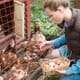 England updates rules for seasonal poultry workers thumbnail image