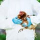 Egg producer culls 175,000 birds, destroys 900,000 eggs in coronavirus scare thumbnail image