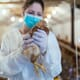 Polish bird flu outbreak spreads, with two more cases thumbnail image