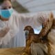 Human infection of H7N9 avian influenza in China's Inner Mongolia thumbnail image