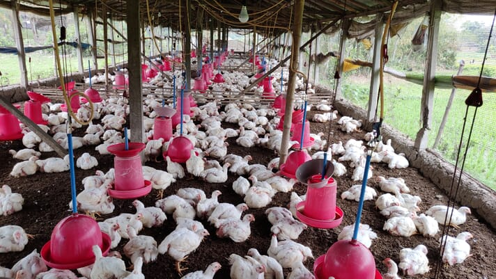 A false link to coronavirus is devastating West Bengal's poultry industry thumbnail image