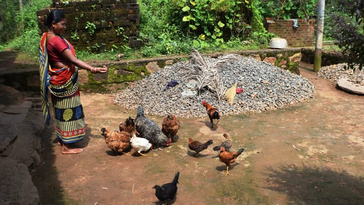 Poultry taboo is one more social barrier for women and girls in parts of India thumbnail image