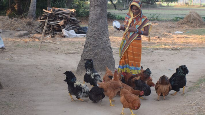 Women in Poultry: how backyard poultry empowers India's rural women thumbnail image