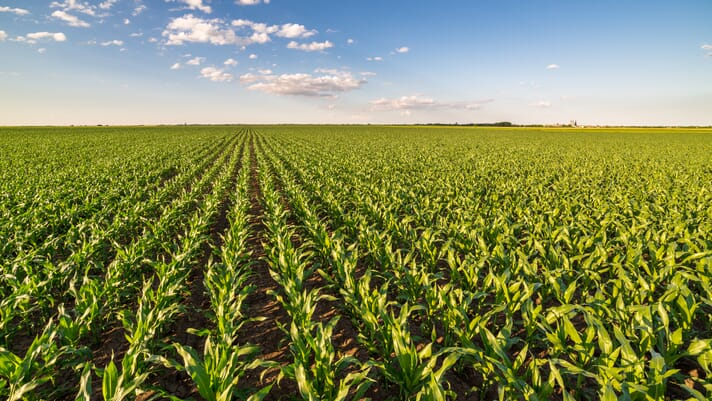 Daily US grain report: mixed markets as traders gauge hot, dry weather outlook for Corn Belt thumbnail image