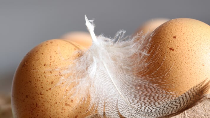 New EU project aims to convert discarded poultry feathers into valuable raw materials thumbnail image