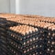 Weekly poultry digest: US broiler production set to decrease in 2022 thumbnail image