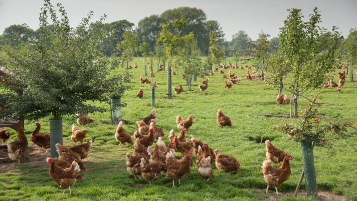 Egg price comparison tool set for launch to free range producers thumbnail image