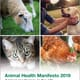 NOAH manifesto for animal health launched thumbnail image