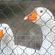 Outbreaks of H5N8 avian influenza in South Korea reach 100 thumbnail image
