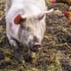 New animal health and safety rules for UK businesses thumbnail image