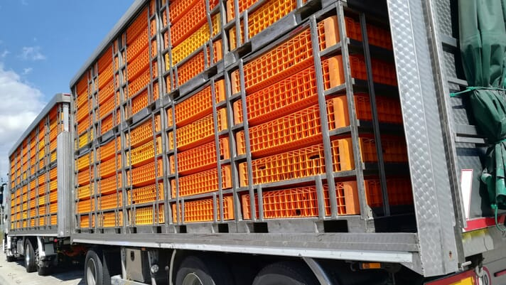 BPC warns that border disruptions will place heavy burdens on British poultry producers thumbnail image