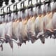 USDA faces lawsuit over poultry welfare at slaughter thumbnail image