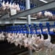 China blocks poultry imports from Brazil amid COVID-19 concerns thumbnail image
