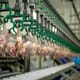US meat packing union asks poultry plant to reinstate hazard pay thumbnail image