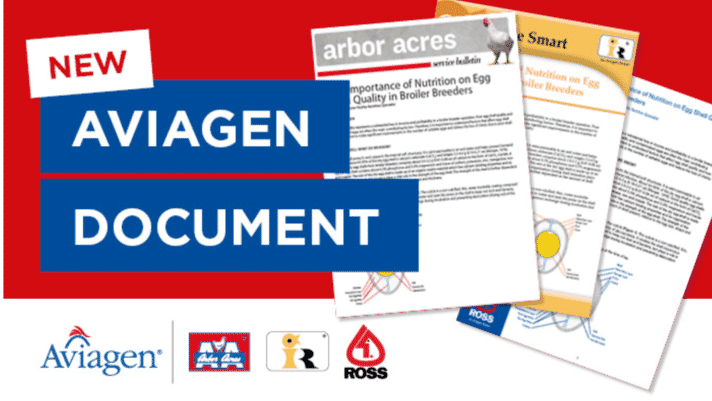 Hot off the press – Latest Aviagen Brief on importance of nutrition on egg shell quality in broiler breeders thumbnail image