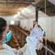 New Nanotechnology Tool Detects Avian Flu Virus on Farms thumbnail image