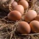 Imported eggs will force Western Australian farmers to close thumbnail image