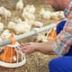Chicken Council's new website shares info on how broilers are raised, produced in US thumbnail image