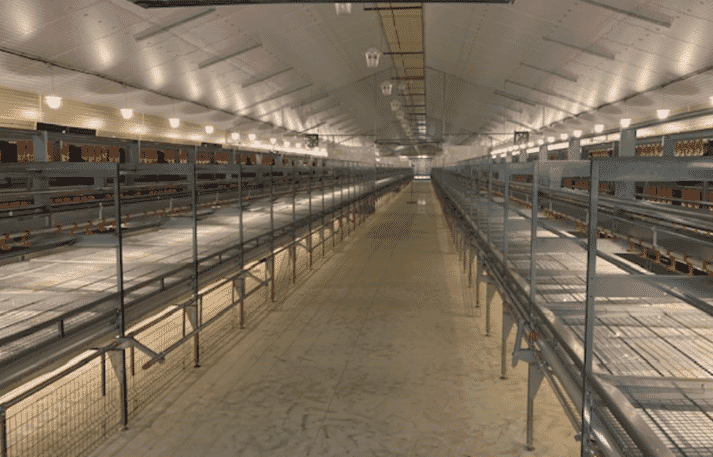 Natura Nova 270 for organic egg production