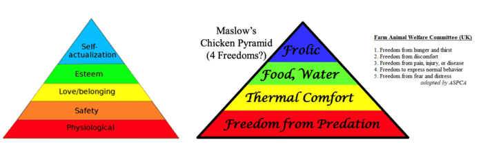 Figure 1. Maslow's pyramid and the pyramid applied to chickens