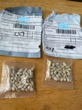 Unsolicited packages of seeds, many involving addresses from China, have been reported to agriculture officials by US citizens from coast to coast.