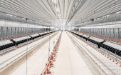 Breeder management: Interior view of a production house thumbnail