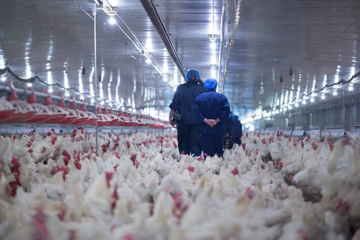 People in protective gear walking through a poultry shed