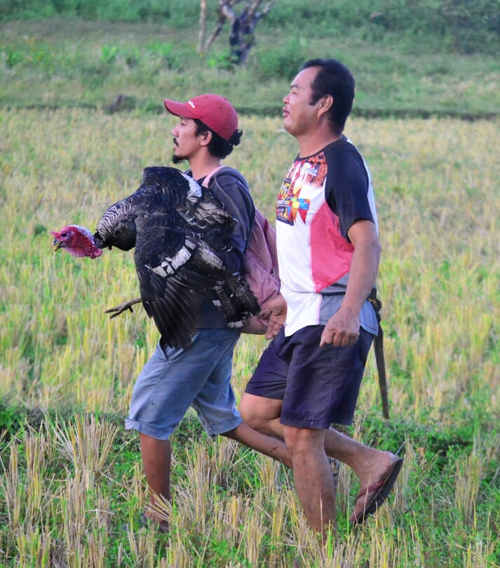 two men in a field walking, one of them holding a turkey