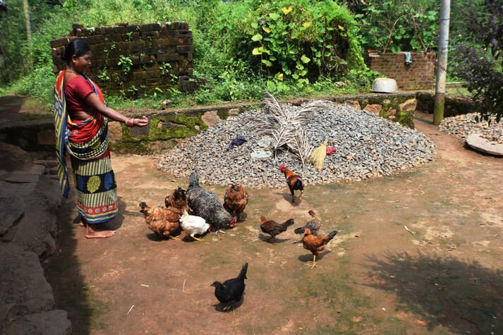 a woman wearing a magenta robe feeds chickens in the yard