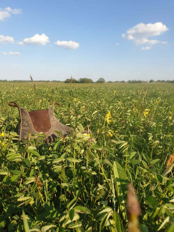 a boot in a field of grass