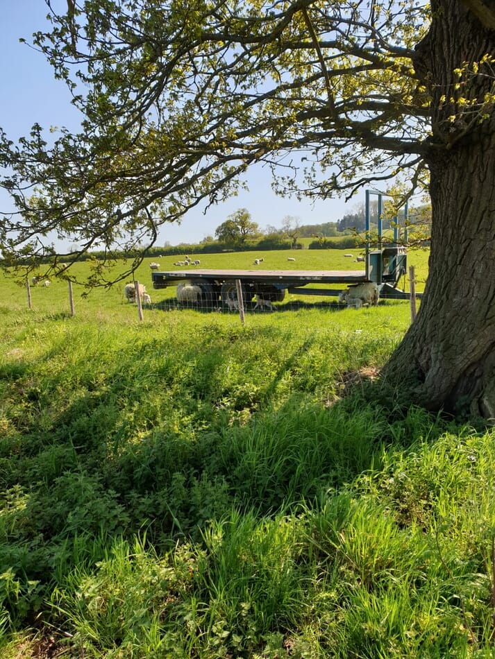 a trailer in a field next to a tree surrounded by sheep