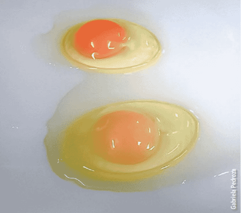 Figure 1: Darker egg yolks (top) from hens fed a diet enhanced with 15 percent BSLM compared to diet without BSLM (bottom)