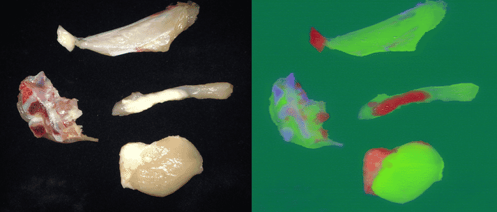 A hyperspectral image of chicken parts