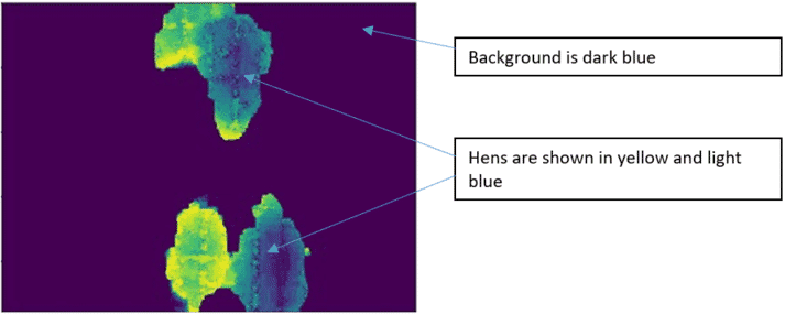 Figure 1. Filtered depth image showing hens (yellow and blue) and background (dark blue). The activity index is the sum of the pixels that change from background to hen pixel, or from hen to background pixel, divided by the total sum of pixels.