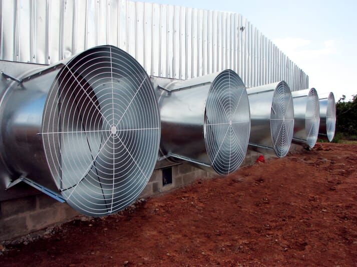 Commercial poultry houses are designed to have good ventilation to prevent ammonia build up