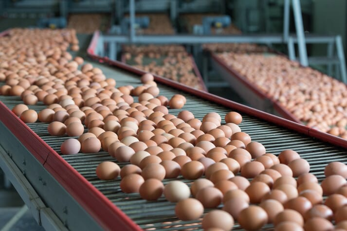 Thousands of eggs on conveyor belts in a factory