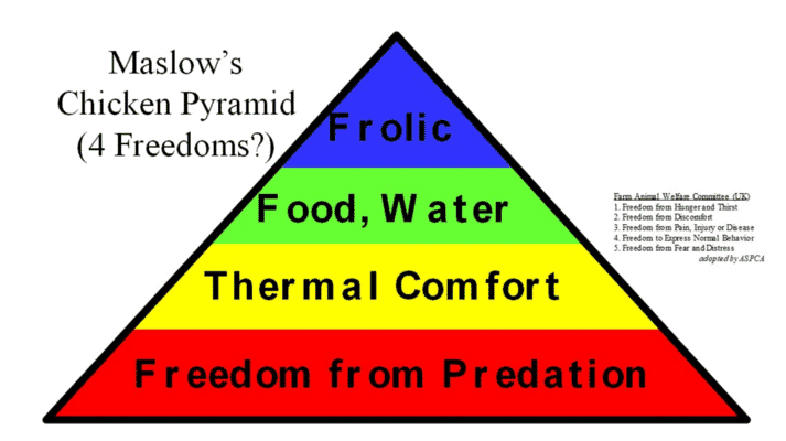 Figure 2. The pyramid applied to chickens