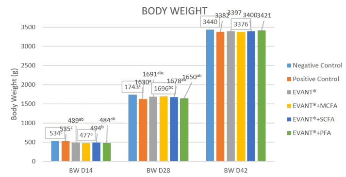Graphic 3. Body Weight