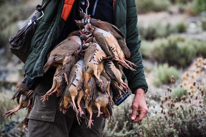 a hunter with approximately seven quails hanging from a chain