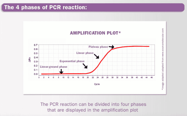 graph showing the different phases of PCR reaction