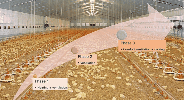 1 – An understanding of these three phases of climate control is sufficient for good ventilation and correct adjustment of the parameters in the climate computer. The phases take into account both the birds' growth phases and the weather conditions.