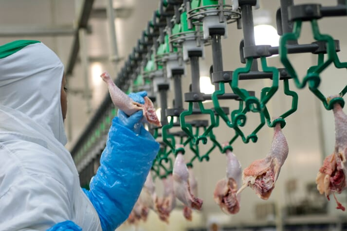a worker removes a chicken leg from the production line