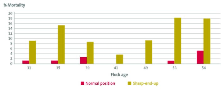 Figure: Embryo mortality 19-21 days for eggs incubated in normal position versus eggs incubated sharp-end-up