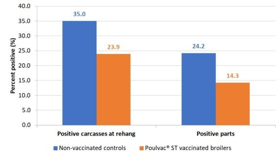 Figure 2. Salmonella-positive rinses at rehang and parts in broilers vaccinated against Salmonella with a modified-live vaccine and raised without antibiotics as compared to unvaccinated controls