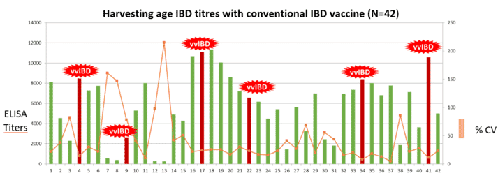Figure 2: IBD Serology of 42 flocks receiving conventional IBD vaccine in the farm, India 2018